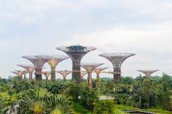 Singapore Singapore - September 20, 2014: Blomma kupolen och det toppna trädet på trädgården vid fjärden Royaltyfri Bild