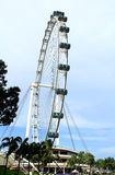 Singapore sky flyer and tree. Singapore Flyer - the Largest Ferris Wheel in the World Stock Photos