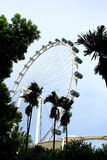 Singapore sky flyer and tree. Singapore Flyer - the Largest Ferris Wheel in the World Royalty Free Stock Images