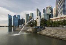 Singapore skyline, Merlion statue. Singapore Skyline and Merlion statue at downtown in the morning Royalty Free Stock Photography
