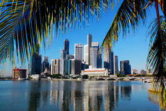 Singapore skyline and palmleafs. Singapore skyline with palmleafs and a clear blue sky Royalty Free Stock Images