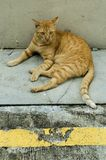 Singapore Stray Cat. At the back of the street Stock Images