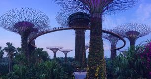 Singapore super tree grove. Love this amazing super tree grove in the middle of the centre Royalty Free Stock Photos
