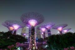 Singapore. Supertree grove, singapore at night Royalty Free Stock Photo