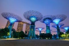 Singapore. Supertree grove tree at night, Singapore Stock Photo