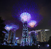 Singapore Supertrees Royaltyfria Foton