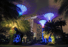 Singapore Supertrees Arkivbilder