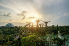 Singapore Supertrees in garden by the bay in moring at Bay South Stock Photography
