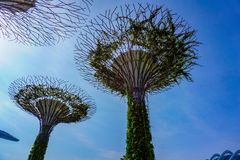 Singapore Supertrees in garden by the bay at Bay South Singapore. stock images