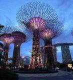 Singapore Supertrees Stock Photos