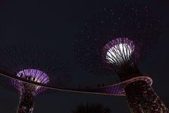 Singapore Supertrees i trädgårdar vid fjärden Arkivfoton