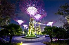 Singapore Supertrees. Night view of The Supertree Grove at Gardens by the Bay Stock Images