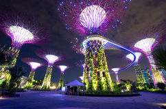 Singapore Supertrees. Night view of The Supertree Grove at Gardens by the Bay Royalty Free Stock Photography