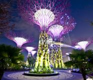Singapore Supertrees. Night view of The Supertree Grove at Gardens by the Bay Royalty Free Stock Photos