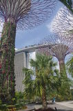 The Singapore supertrees Royalty Free Stock Image