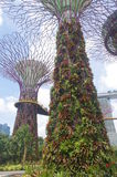 The Singapore supertrees Stock Photography