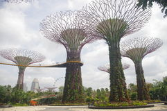 The Singapore supertrees Royalty Free Stock Photo