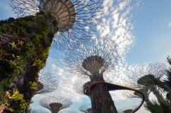 Singapore toppna träd Arkivfoton