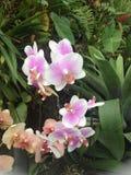 Singapore trädgård vid fjärden Royaltyfria Bilder
