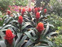 Singapore trädgård vid fjärden Royaltyfri Bild