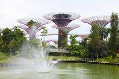 Singapore trädgård vid fjärden Arkivfoto