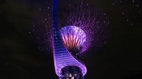 Singapore - trädgårdar vid fjärden royaltyfria foton