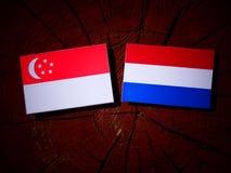 Singaporean flag with Dutch flag on a tree stump isolated. Singaporean flag with Dutch flag on a tree stump Royalty Free Stock Images