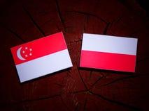 Singaporean flag with Polish flag on a tree stump isolated Stock Images