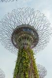SINGAPOUR - 12 MAI : Jardins par la baie le 12 mars 2014 dans Singap Photos stock