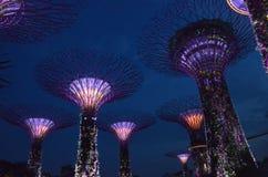 Singapour vue de nuit du 26 juillet du verger de Supertree aux jardins Image libre de droits