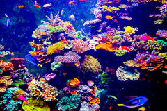 Singapur-Aquarium Stockfotografie