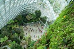 SINGAPUR - 23 de julio de 2016: Dentro de la nube Forest Dome - jardín por la bahía Fotografía de archivo libre de regalías