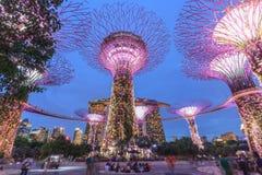 Singapur, Gärten durch die Bucht, Superbaum Grove Lizenzfreies Stockfoto
