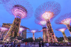 Singapur, jardines por la bahía, arboleda estupenda del árbol Fotografía de archivo