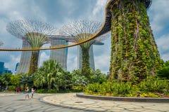 SINGAPUR SINGAPUR, LUTY, - 01, 2018: Plenerowy widok niezidentyfikowani ludzie chodzi pod supertree przy ogródami obok Obrazy Stock