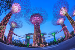 SINGAPUR, MARZEC - 27: Noc widok Supertree gaj przy ogródów b fotografia royalty free