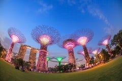 SINGAPUR, MARZEC - 27: Noc widok Supertree gaj przy ogródów b fotografia stock
