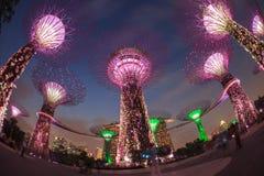 SINGAPUR, MARZEC - 27: Noc widok Supertree gaj przy ogródów b obraz stock