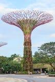 SINGAPUR, MARZEC - 27: Noc widok Supertree gaj przy ogródów b zdjęcia royalty free
