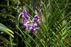 Orchids garden Singapore National Orchid Garden Singapore. Singapur National Orchid Garden Singapur Orchideen garten Stock Image