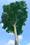 Singapur ogródu botanicznego serie zdjęcia royalty free