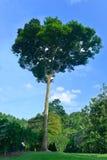 Singapur ogródu botanicznego serie obrazy royalty free