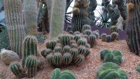 Singapur Singapur ogródy botaniczni Kaktusowi obraz royalty free