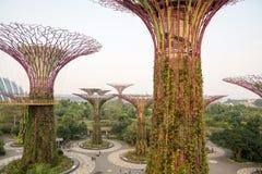 Singapur - ogródy zatoką zdjęcie royalty free