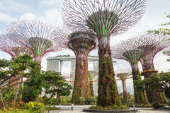 Singapur ogródy zatoką Zdjęcie Royalty Free