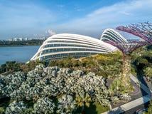 Singapur-Rad Lizenzfreie Stockfotografie