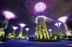 Singapur Supertrees Fotografía de archivo libre de regalías