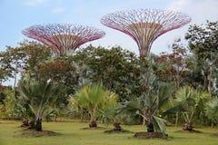 Singapur Supertrees Lizenzfreies Stockfoto