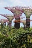 Singapur Supertrees Lizenzfreie Stockfotos