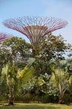 Singapur Supertrees Lizenzfreie Stockbilder